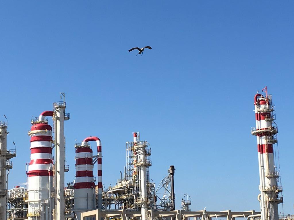 Falchi in volo sull'area della raffineria ENI di Taranto